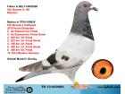 TR19-002600 BABASI VANBRUANE - ANNESİ VAN - BRUANE CATTRYSSE MARATON