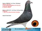 TR19-003688 ERKEK / JOS THONE / STİCELBAUT MARATON