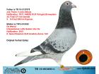 TR19-003693 DİŞİ / JOS TONE / LOUIS DELEUS / DE WEERD