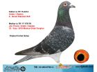 TR19-003753 DİŞİ /BABA ARDEN-GASTON / ANNE J THONE - ARDEN - GASTON