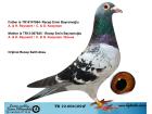 TR19-004109 ERKEK / ORJ. SALİH AKSU - KOOPMAN - REYANAERT - KEES BOSUA