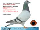 TR19-004650 ERKEK / GABY VANDENABEELE % 100 ANNEDEN KARDES 26. FİNAL SOFİA