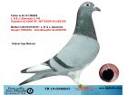 TR19-004880 DİŞİ / L. B. & J. GEERINCKX % 100