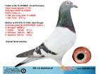 TR19-008544 / BABA GABY VANDENABEELE % 100 ANNE HARDY KRUGER % 100