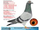 TR19-012136 ERKEK / ORJ TASKAN TENEKE - KARDESININ YAVRUSU 10 FINAL 453 KM OLR DERBY 16 2021