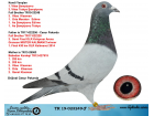 TR19-023249 ERKEK / KENDİSİ VİTES ŞAMPİYONU & 3. VİTES KLASMAN TRAKYA