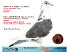 TR19-02551 ERKEK / BABASI JAN AARDEN A/ NNESİ VAN DER WEGEN - MENNE DOCHTER
