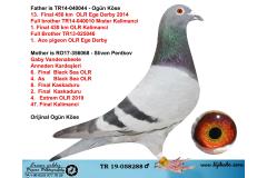 TR19-058288 ERKEK / BABASI 13. FİNAL EGE DERBY FULL BROTHER MISTER KALIMANCI