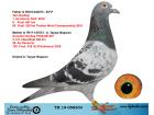 TR19-058303 BABASININ TAM KAR. 1. AS EXTREM OLR 6. FİNAL ANNESİ ANNEDEN KARDES 13. FİNAL KALİMANCİ