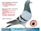 TR19-058315 ERKEK / BABADAN KARDEŞİ AYIŞIĞI 13. FİNAL OLR KAL. ANNESİ CİNGÖZ