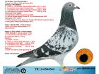 TR19-058454 DİŞİ / KARDEŞİ 3 SEMİ FİNAL OLR EGE DERBY ANNEDEN KARDESI 33. FİNAL AGR