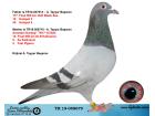 TR19-058679 ERKEK / BABASI 177. FİNAL OLR BLACK SEA ANNESİ YARI KARDEŞ 13. FİNAL KALİMANCİ