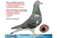 TR19-058690 DİŞİ / BABASININ KARDEŞİ MISTIR KALİMANCİ ANNESİ BİR ÇOK ŞAMPİYON SOYU
