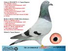 TR19-058699 ERKEK /ABABA CİNGÖZ OĞLU ANNESİ SİLVİA CİNGÖZ ANNESİ