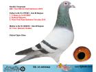 TR19-059062 ERKEK / KENDİSİ KALİMANCİDE FİNAL 289. 518 KM 2019