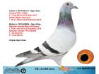 TR19-059133 DİŞİ / BABASININ KARDESI 2. FİNAL SOFİA ANNESININ KARDESI MISTER KALIMANCI