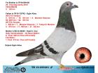 TR19-059201 ERKEK / KARDEŞİ 25. FİNAL EGE DERBY ANNESİ GABY - ŞABLON