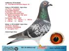 TR19-059214 ERKEK / JOS THONE - SCORPİON - AARDEN