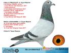 TR19-059378 ERKEK / BABASI CİNGÖZ KARDEŞİ ANNESİ 30 FİNAL OLR SUNNY BEACH