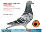 TR19-059391 DİŞİ / JANSSEN GRONDELARS - WOUTERS