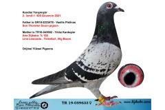 TR19-059633 DİŞİ / KENDİSİ YARIŞMIŞTIR   2. İZMİT-1  505 GÜV.