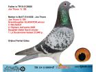TR19-115009 ERKEK / JOS THONE % 100 ANNESİ ORJ JOS THONE