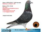TR19-115060 ERKEK / BABASI BATENBUR MERWE ANNESİ JOS THONE INBREED NADIRA
