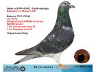 TR19-115101 DİŞİ / BABASI BATENBURG MERWE ANNESİ JOS THONE NADIRA INBRED