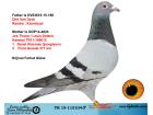 TR19-115104 ERKEK / BABASI VAN DYCK - ANNESİ JOS THONE LOUIS DELEUS