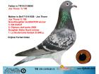 TR19-115121 DİŞİ / JOS THONE % 100 ANNESİ ORJ JOS THONE