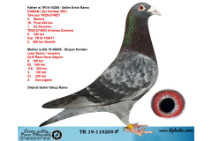 TR19-115205 ERKEK / BABASI DUMAN (  206 KIZ KARDEŞİ ) ANNESİ LEEN BOERS JANSSEN