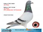 TR19-139704 ERKEK / JOS THONE