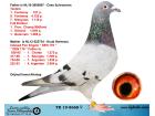 TR19-8668 DİŞİ / BABASI FLOR ENGELS KOOPMAN ANNESİ FLOR ENGELS % 100 INBRED DEN 178