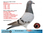 TR20-001006 DİŞİ / BABASI STEFFL ELEFANT OGLU ANNESİ STEFFL KARDEŞİ 3 FİNAL SOFİA