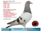 TR20-001007 DİŞİ / BABASI STEFFL ELEFANT OGLU ANNESİ STEFFL KARDEŞİ 3 FİNAL SOFİA