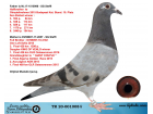 TR20-001008 DİŞİ / BABASI STEFFL ELEFANT OGLU ANNESİ STEFFL KARDEŞİ 3 FİNAL SOFİA