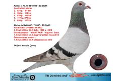 TR20-001010 ERKEK / BABASI ELEFANT OGLU ANNESİ 3. FİNAL SOFİA KIZ KARDES SG STEFFL % 100
