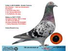TR20-001025 ERKEK / BABASI DİMİTAR T. BREEZER OĞLU ANNESİ DİMİTAR T DARA KIZI