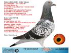 TR20-001026 ERKEK / BABASI DİMİTAR T. BREEZER OĞLU ANNESİ DİMİTAR T DARA KIZI