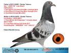 TR20-001037 DİŞİ / BABASI LEEN 739 OĞLU ANNESİNİN KARDEŞİ SÜPERSTAR 460 KM ŞAMPİYONU
