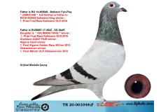 TR20-001048 ERKEK / BABASININ KARDES YAVRUSU 1 FİNAL KALIMANCİ ANNESİ KALİMANCİ ŞAMPİYON KIZI
