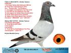 TR20-001053 DİŞİ / BABASI DİMİTAR T. BREEZER TORUNU ANNESİ LEEN 739 TORUNU