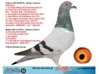 TR20-001054 DİŞİ / BABASI DİMİTAR T. BREEZER TORUNU ANNESİ LEEN 739 TORUNU
