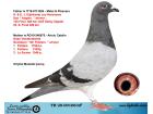 TR20-001063 ERKEK / EIJERKAMP LEO HEREMANS - GABY VANDENABBELE