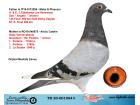 TR20-001064 DİŞİ / EIJERKAMP LEO HEREMANS - GABY VANDENABBELE