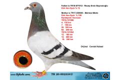 TR20-002334 DİŞİ / VAN DYCK %  75