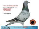 TR20-012605 DİŞİ / BABASI DE RIJCK WALTER ANNESİ REYNAERT % 100
