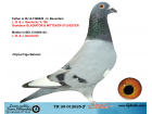 TR20-012625 ERKEK / L.B.&J. GEERRINCKX