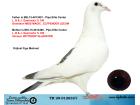 TR20-012632 DİŞİ / 2 ORJ PİPA ELİTE CENTER - L.B.&J. GEERINCKX % 100