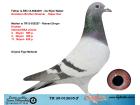 TR20-012635 ERKEK / BABASI DE RIJCK WALTER ANNESİ HOUBEN